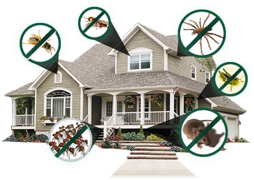 Residential Pest Control Services | All Natural Pest Solutions